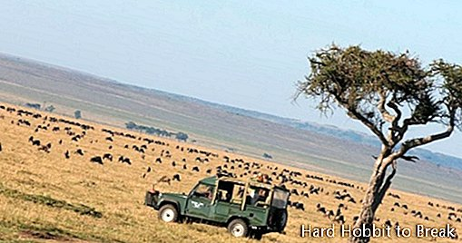 Tips for making the safari in Africa cheaper