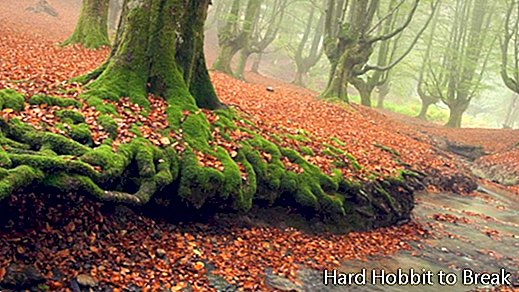The most beautiful forests in the world