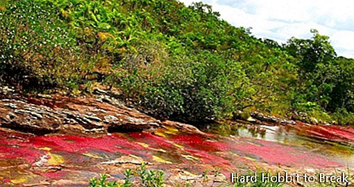 Caño Cristales, the river of five colors
