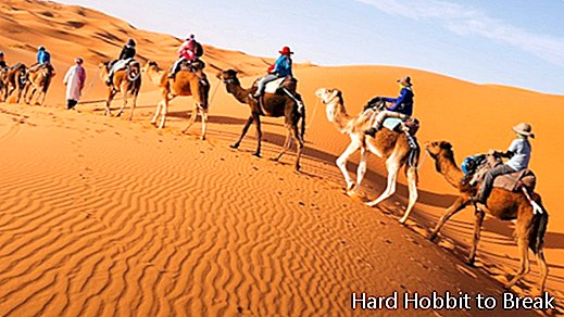 Curiosities about the Sahara desert