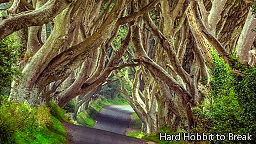 The Dark Hedges, a dark but beautiful road in Northern Ireland
