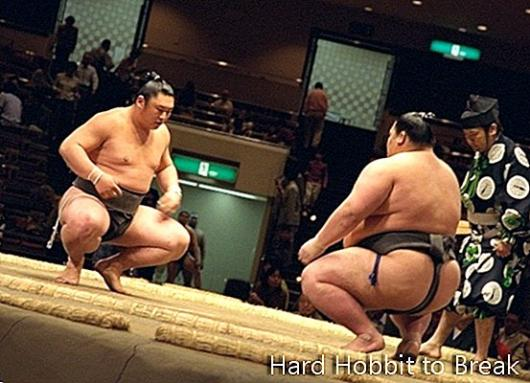 Travel to Japan to learn about sumo
