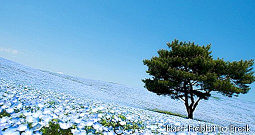 Japan's beautiful Hitachi Coastal Park