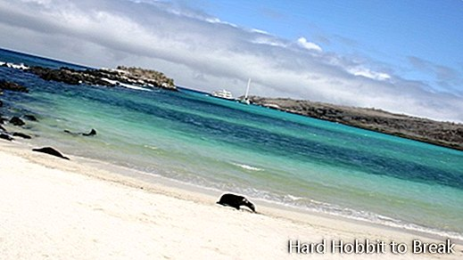 Galapagos-Beach-at-Tortuga-Bay