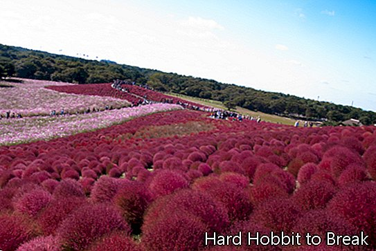 Hitachi park v japonskom Hitachinaka