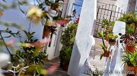 Frigiliana, one of the most beautiful towns in Malaga
